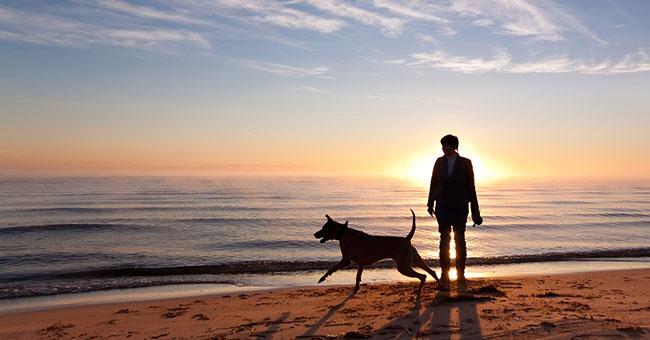 Risultati immagini per cane in spiaggia