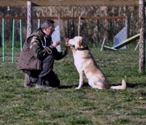 Leo-Asd-Il-lupo-Centro-Cinofilo-Toscana-Firenze-29