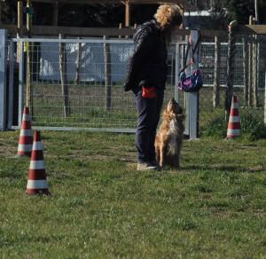Willie-Asd-Il-lupo-Centro-Cinofilo-Toscana-Firenze-03